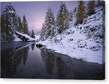 Winter Reverie Canvas Print by Dominique Dubied