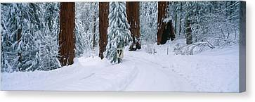 Winter Road Into Sequoia National Park Canvas Print by Panoramic Images