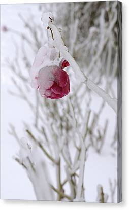 Canvas Print featuring the photograph Winter Rose by Arthur Fix