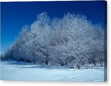 Winter Scene Canvas Print by Raju Alagawadi