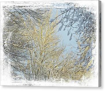 Winter Scenic Canvas Print