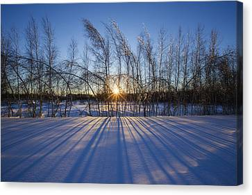 Winter Shadows Canvas Print by Mircea Costina Photography