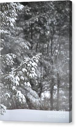 Canvas Print featuring the photograph Winter Snow by John Black
