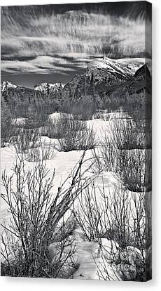 Dogwood Lake Canvas Print - Winter Spice In Monochrome by Royce Howland