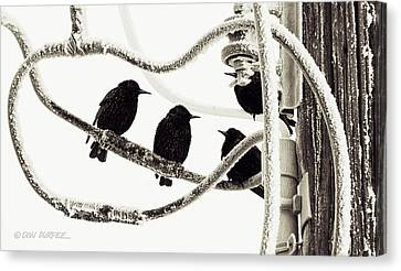 Canvas Print featuring the photograph Winter Starlings by Don Durfee