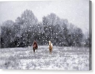 Winter Storm Canvas Print by Darren Fisher