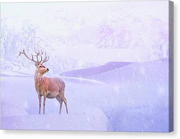 Winter Story Canvas Print