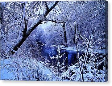Winter Stream Canvas Print by Phil Koch
