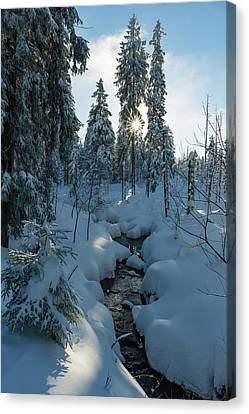 winter sun in Upper Harz Canvas Print by Andreas Levi