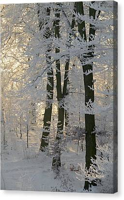 Winter Sun Canvas Print by Odd Jeppesen