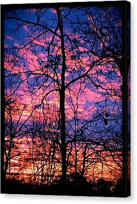Winter Sunrise Canvas Print by Betty Buller Whitehead