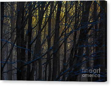 Winter Sunrise Canvas Print by Diane Diederich