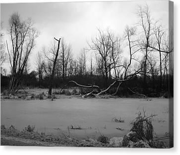 Winter Swamp Canvas Print