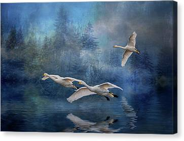 Winter Swans Canvas Print by Brian Tarr