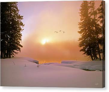 Canvas Print featuring the photograph Winter Swans by Leland D Howard