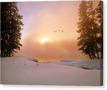 Swans... Canvas Print - Winter Swans by Leland D Howard