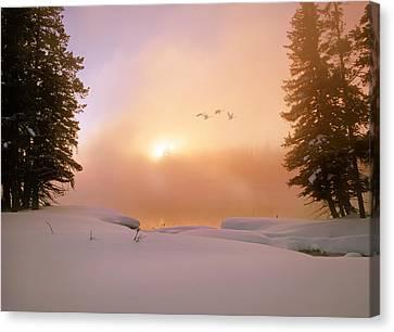 Winter Swans Canvas Print by Leland D Howard