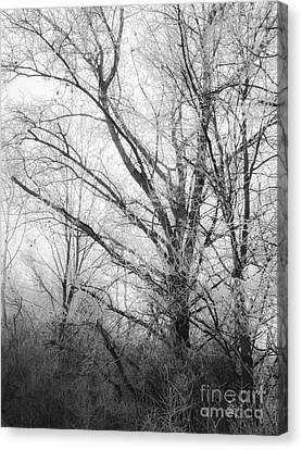Motography Canvas Print - Winter Tales II by Noze P