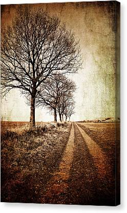 Winter Track With Trees Canvas Print by Meirion Matthias