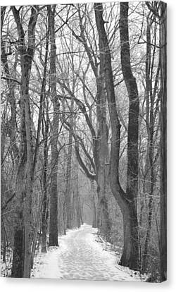 Winter Trail Canvas Print by Peter  McIntosh
