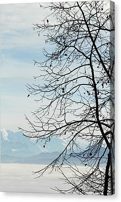 Winter Tree And Alps Mountains Upon The Fog Canvas Print
