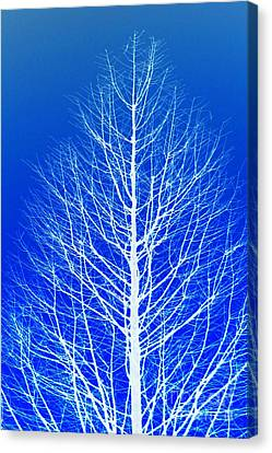 Winter Tree Canvas Print by Donna Bentley