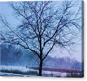 Winter Tree II Canvas Print