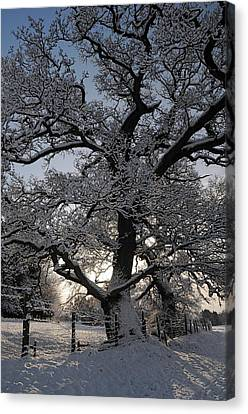 Winter Tree In North Wales Canvas Print