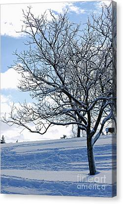 Canvas Print featuring the photograph Winter Tree by Lila Fisher-Wenzel