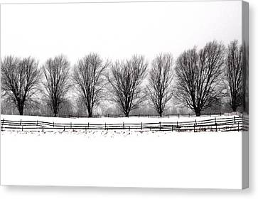 Canvas Print featuring the photograph Winter Treeline by Don Nieman