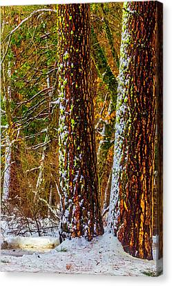 Winter Trees 2 Canvas Print by Garry Gay