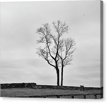 Winter Trees And Fences Canvas Print
