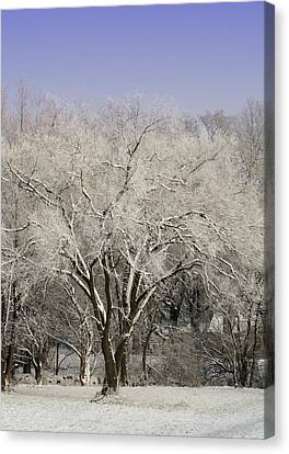 Winter Trees Canvas Print by Diane Merkle