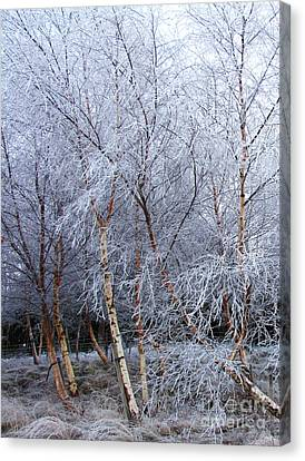 Winter Trees Canvas Print by Jacqi Elmslie