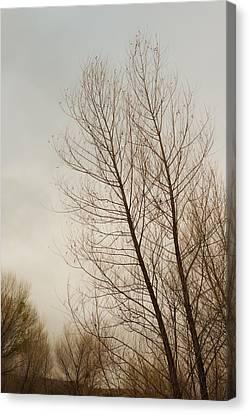 Verde River Canvas Print - Winter Trees by Joseph Smith