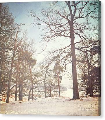 Canvas Print featuring the photograph Winter Trees by Lyn Randle