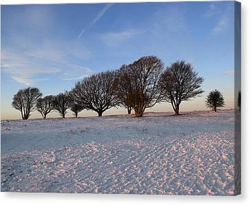 Winter Trees On The Ring Canvas Print by Hazy Apple