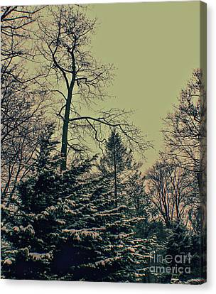 Canvas Print featuring the photograph Winter Trees by Sandy Moulder