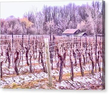 Merlot Canvas Print - Winter Vineyards - Niagara Region by Leslie Montgomery