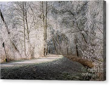 Winter Walk In Bavaria Canvas Print