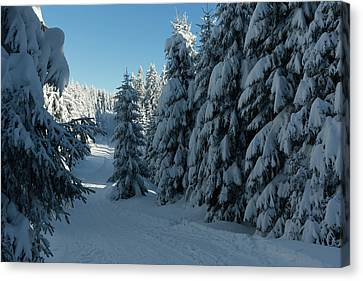 winter way in the Harz Canvas Print by Andreas Levi
