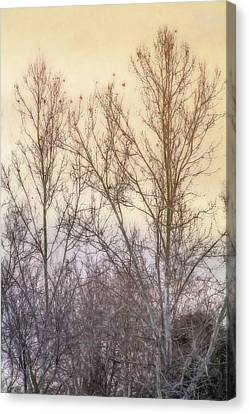 Bare Trees Canvas Print - Winter Whisper In The Trees by Terry Davis