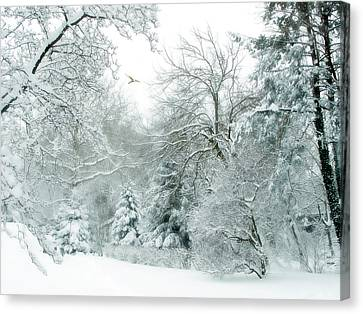Winter Whisper Canvas Print by Jessica Jenney