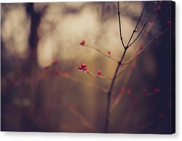 Canvas Print featuring the photograph Winter Whispers by Shane Holsclaw