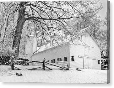 Winter White  Bw Canvas Print by Bill Wakeley