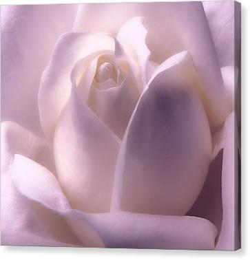 Winter White Rose 2 Canvas Print