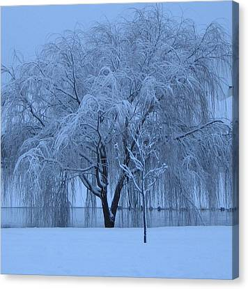 Canvas Print featuring the photograph Winter Willow Tree Before Dawn_fort Worth_tx by Barbara Yearty
