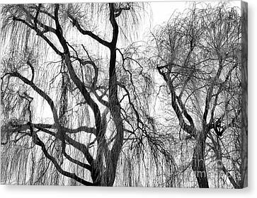 Winter Willows Canvas Print by Tim Gainey