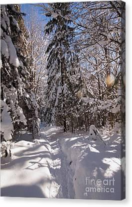 Winter Wonderland 2 Canvas Print by Rudi Prott