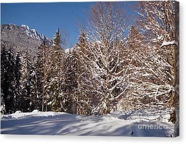 Winter Wonderland 3 Canvas Print by Rudi Prott